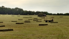 haymaking on ABMF