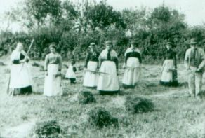raking-hay--llanon--about-1900